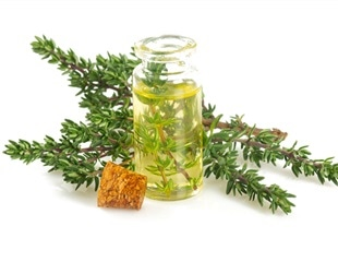 Study looks at potent phytocompounds from Himalayan herbs to treat COVID-19