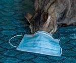 SARS-CoV-2 can be transmitted by cats