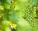 Grapevine leaf extract inhibits SARS-CoV-2 and HSV-1 replication in the lab