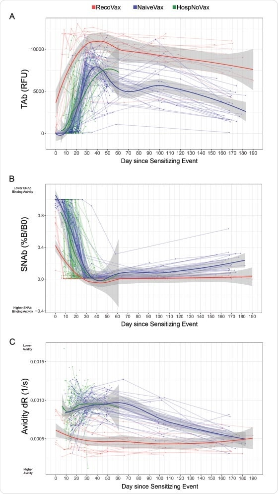 Dynamics of the anti-SARS-CoV-2 antibody response after vaccination or infection utilizing regression models. TAb (A), SNAb (B) levels and avidity (C) are displayed over time. A total of 686 data points were plotted from 19 RecoVax individuals (red), 49 NaïveVax individuals (blue) and 122 HospNoVax patients (green). All participants received the second dose 21 days after the 1st dose. The trend of antibody level overtime was described by applying Muggeo's method of estimating regression models with unknown break-points to estimate the changing time points of the trends.