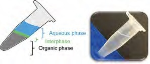 Phase separation typically observed when performing a conventional phenol-based nucleic acid extraction. The photograph shows how difficult it is to see the phase separation.