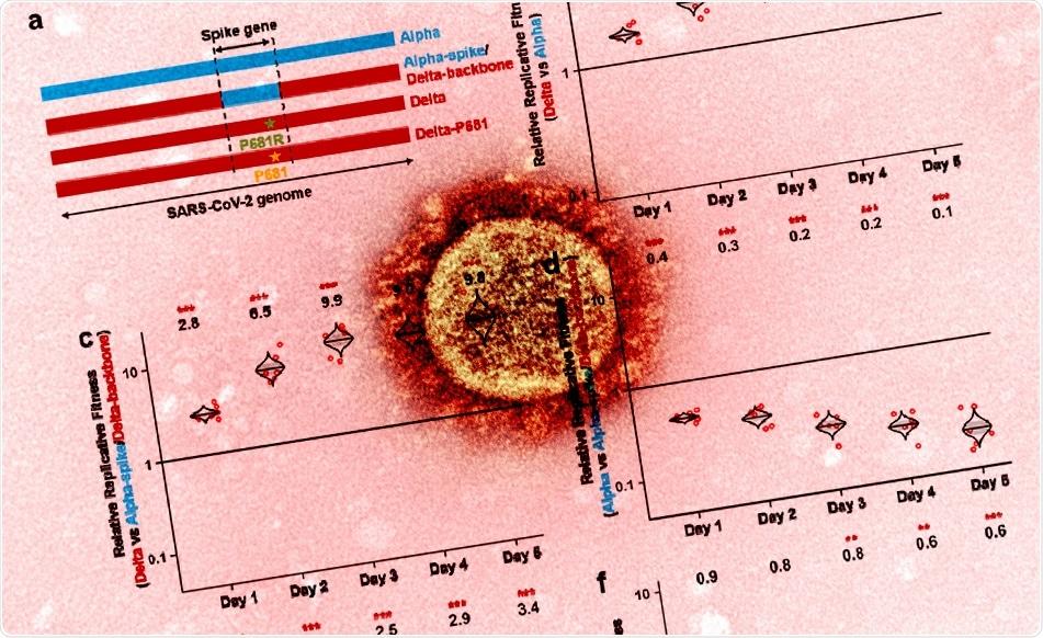 Study: Delta spike P681R mutation enhances SARS-CoV-2 fitness over Alpha variant. Image Credit: NIAID