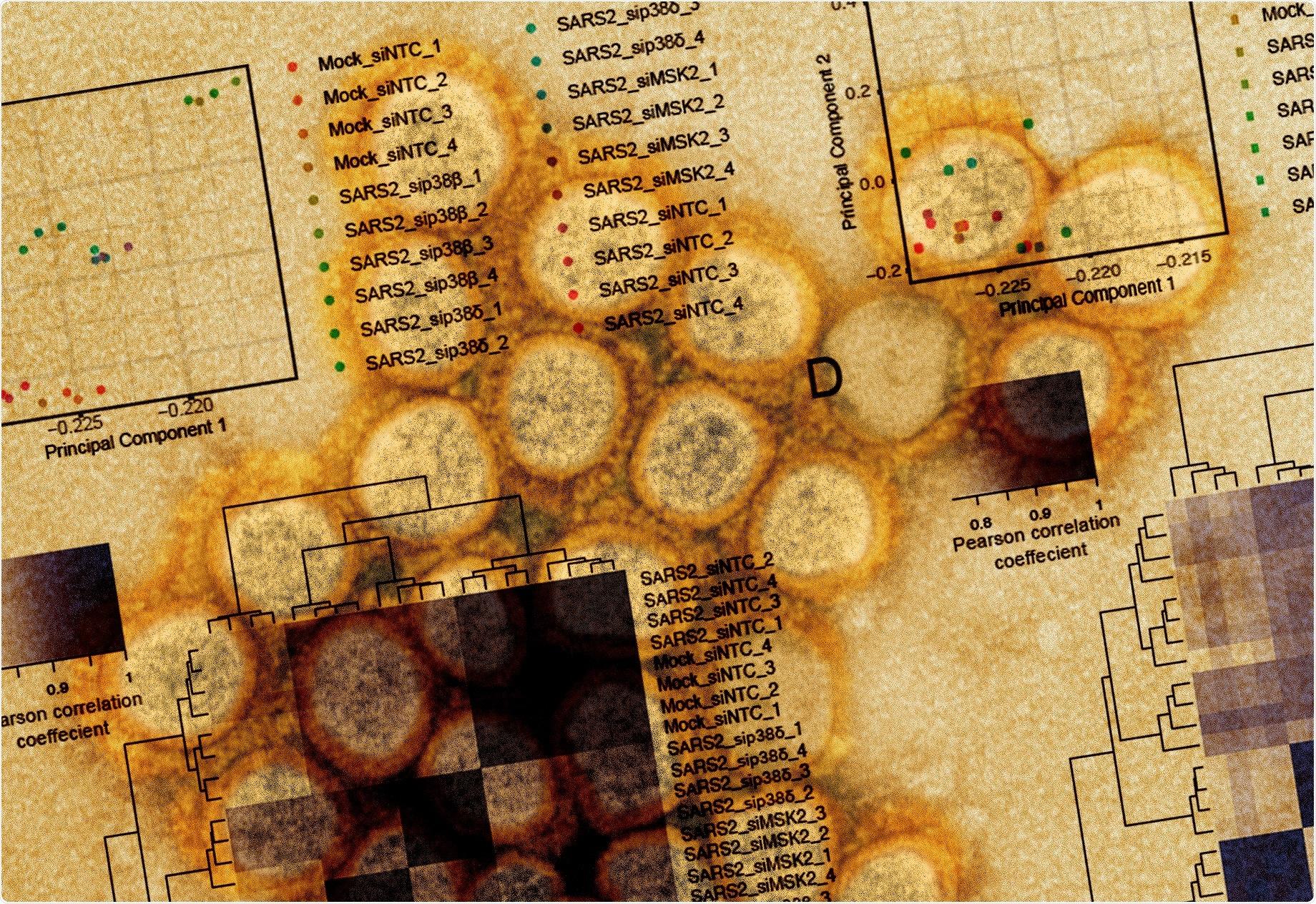 Study: SARS-CoV-2 hijacks p38ß/MAPK11 to promote viral protein translation. Image Credit: NIAID