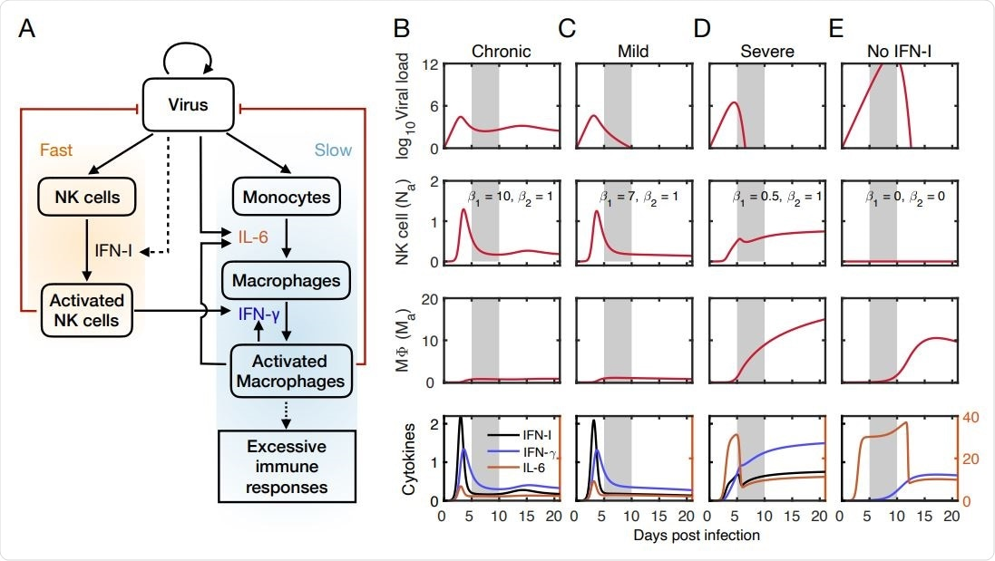 Mathematical model captures outcomes of viral infection at the early stage.