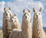 Camelid nanobody anti-SARS-CoV-2 drug candidates