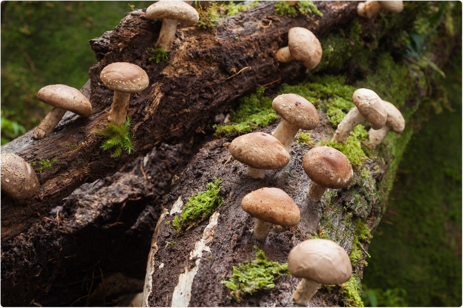 """Study: What's for dinner this time?: DNA authentication of """"wild mushrooms"""" in food products sold in the USA. Image Credit: Puttography/Shutterstock"""