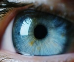 Vaccination may protect against SARS-CoV-2 infection at the eye surface