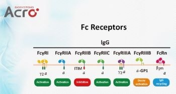 Fc receptor proteins for research and development