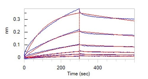 Loaded Human NOTCH2, Fc Tag (Cat. No. NO2-H5255) on Protein A Biosensor, can bind Human DLL4, His Tag (Cat. No. DL4-H5227) with an affinity constant of 77.6 nM as determined in BLI assay (ForteBio Octet Red96e) (Routinely tested).