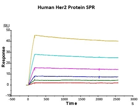 Immobilized Herceptin on CM5 Chip via anti-human Fc IgG, can bind Human Her2 Protein (Cat. No. HE2-H5225) with an affinity constant of 0.147 nM as determined in SPR assay (Biacore T200).