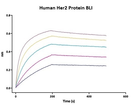 Immobilized Herceptin on AHC Biosensor can bind Human Her2 Protein (Cat. No. HE2-H5225) with an affinity constant of 0.93 nM as determined in BLI assay (Fortebio Octet 96).