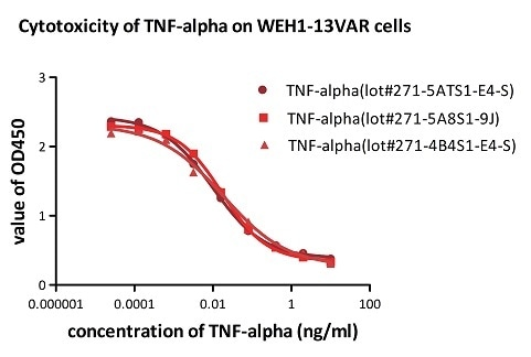 Recombinant Human TNF-alpha (Cat. No. TNA-H4211) induces cytotoxicity effect on the WEH1-13VAR cells in the presence of the metabolic inhibitor actinomycin D. The ED50 for this effect is 0.007–0.014 ng/mL. The result shows that the batch variation among the tested samples is negligible.