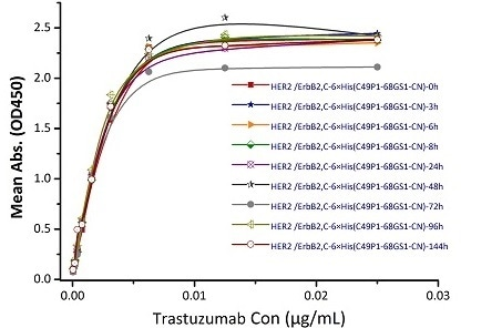Immobilized Biotinylated Human Her2, His Tag (Cat. No. HE2-H822R) at 0.05 μg/mL (100 μL/well) can bind Trastuzumab. The result shows that the Biotinylated Human Her2, His Tag (Cat. No. HE2-H822R) is stable at 37 ℃ for 144 hours without performance reduction.