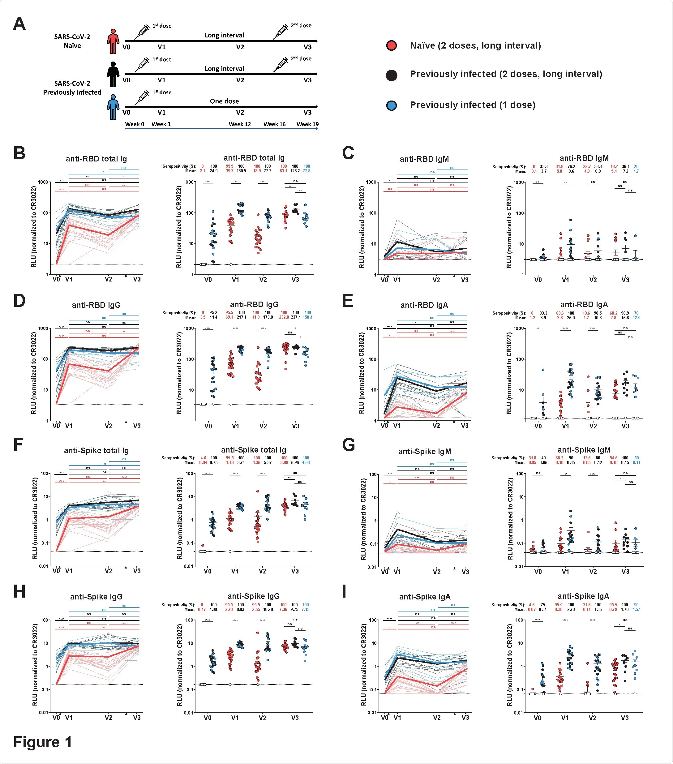 Elicitation of RBD- and Spike-specific antibodies in SARS-CoV-2 naïve and previously-infected individuals. (A) SARS-CoV-2 vaccine cohort design. (B-E) Indirect ELISA was performed by incubating plasma samples from naïve and PI donors collected at V0, V1, V2 and V3 with recombinant SARS-CoV-2 RBD protein. Anti-RBD Ab binding was detected using HRP-conjugated (B) anti human IgM+IgG+IgA (C) anti-human IgM, (D) anti-human IgG, or (E) anti-human IgA. Relative light unit (RLU) values obtained with BSA (negative control) were subtracted and further normalized to the signal obtained with the anti-RBD CR3022 mAb present in each plate. (F-I) Cell based ELISA was performed by incubating plasma samples from naïve and PI donors collected at V0, V1, V2 and V3 with HOS cells expressing full-length SARS-CoV-2 S. Anti-S Ab binding was detected using HRP-conjugated (F) anti-human IgM+IgG+IgA (G) anti-human IgM, (H) anti human IgG, or (I) anti-human IgA. RLU values obtained with parental HOS (negative control) were subtracted and further normalized to the signal obtained with the CR3022 mAb present in each plate. Naïve and PI donors with a long interval between the two doses are represented by red and black points respectively and PI donors who received just one dose by blue points. (Left panels) Each curve represents the normalized RLUs obtained with the plasma of one donor at every time point. Mean of each group is represented by a bold line. The time of vaccine dose injections is indicated by black triangles. (Right panels) Plasma samples were grouped in different time points (V0, V1, V2 and V3). Undetectable measures are represented as white symbols, and limits of detection are plotted. Error bars indicate means ± SEM. (* P < 0.05; ** P < 0.01; *** P < 0.001; **** P < 0.0001; ns, non-significant).1