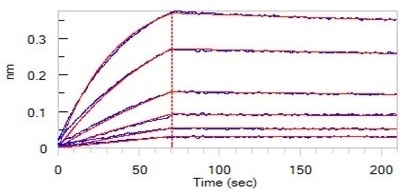 Loaded Trastuzumab on AHC Biosensor, can bind Human Her2, His Tag (Cat. No. HE2-H5225) with an affinity constant of 0.825 nM as determined in BLI assay.