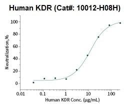 Inhibit the VEGF-dependent proliferation of human umbilical vein endothelial cells (HUVEC)