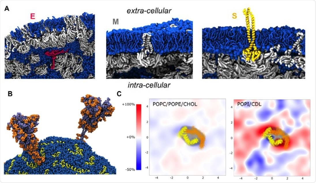 Protein-lipid interactions in the envelop model: A. Local view of the molecular interactions between lipids (sapphire blue) and structural proteins: E pentamer (ruby red), M dimer (silver), and S trimer (gold). Unlike E pentamer that remained fully surrounded by the lipid molecules, every S trimer became supported through molecular interaction at least by one M dimer at the end of the simulation. Similarly, most M dimers were found interacting with other M dimers. B. Two glycosylated S trimers (dark grey) shown together with their glycans (orange) after 1μs simulation run. C. Lipid fingerprinting analysis showed a slight enrichment of the negative lipids around M dimers.