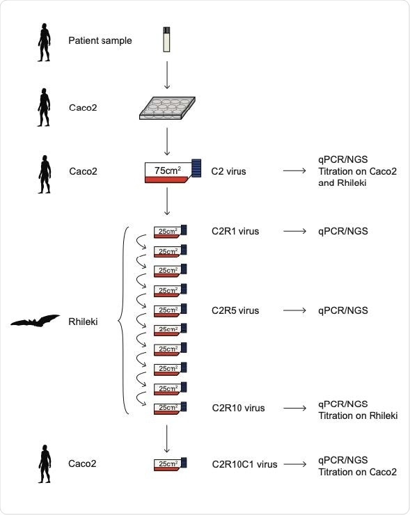 Schematic of virus passage experiments. Succession of the virus cultures in our study, nomenclature of viruses, and tests performed on individual batches.