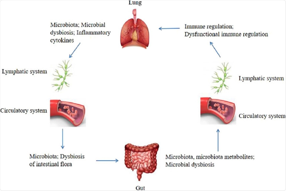 Figure 1Bidirectional gut-lung axis. The gut microbiota and microbiota metabolites can regulate the lung immune through the lymphatic or circulatory systems, when the composition and diversity of the gut microbiota are changed, which termed microbial dysbiosis, can affect the lung immune through the lymphatic or circulatory systems. Similarly, the lung microbiota may also affect the gut microbiota through the lymphatic or circulatory systems, the dysbiosis of the intestinal flora can be caused by the lung microbial dysbiosis and inflammatory cytokines through the lymphatic or circulatory systems.