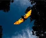 Are bat retroviruses a threat to humans?