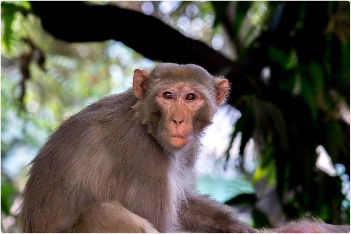 Study: Protective Efficacy of Gastrointestinal SARS-CoV-2 Delivery Against Intranasal and Intratracheal SARS-CoV-2 Challenge in Rhesus Macaques. Image Credit: Robert Ross/ Shutterstock