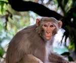 Live oral SARS-CoV-2 vaccine provides partial protection in Rhesus Macaques