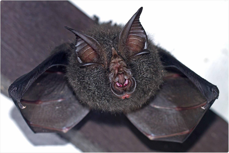 Study: Spike independent replication of human coronavirus in bat cells. Image Credit: Worraket / Shutterstock