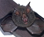 Human coronavirus replicates in bats without using the spike protein