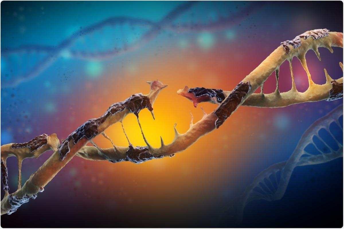 Study: SARS-CoV-2 triggers DNA damage response in Vero E6 cells. Image Credit: Festa/ Shutterstock