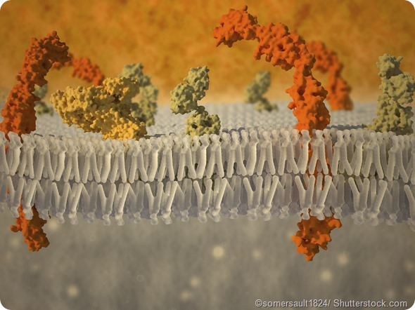 plasma membrane surafce proteins