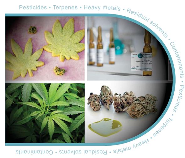 Cannabis catalog cover