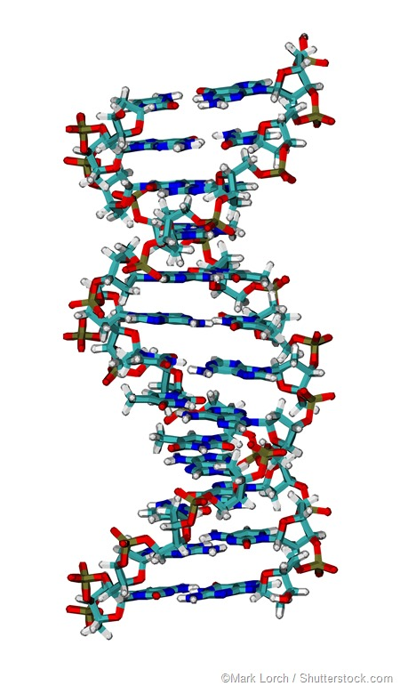 Computer animation DNA helices