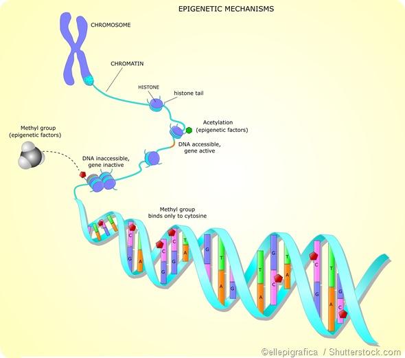 DNA methylation epigentics