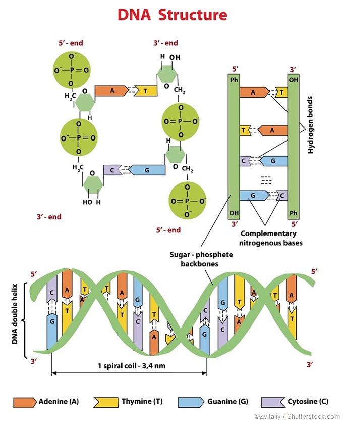 Structure d