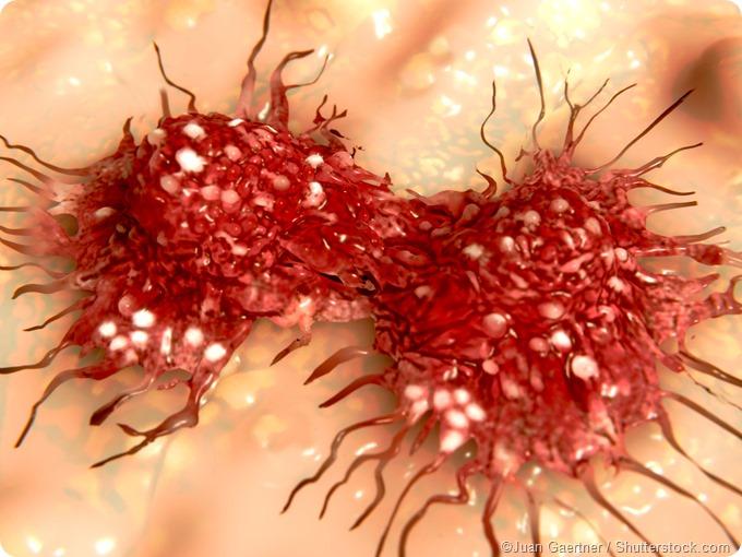 Dividing cancer cell
