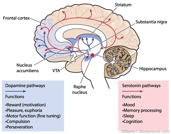 Dopamine and Serotonin pathway
