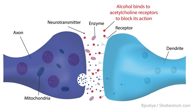 alcohol synapse