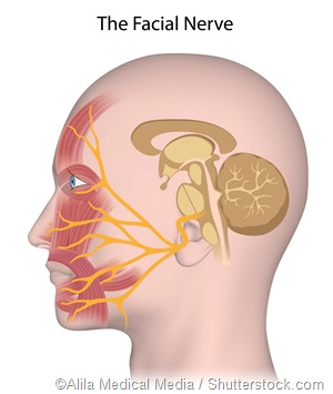 Facial Nerve