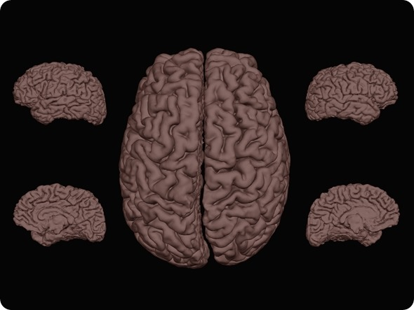 Fibro cervello 1 - ridimensionato