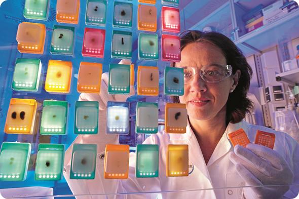 Kirsten Steiner-Hahn, Biologielaborantin bei Global Biomarker Research Berlin, bei der makroskopischen Vorauswahl von FFPE Blöcken (FFPE= Formalin fixierte Organe in Paraffin gebettet)