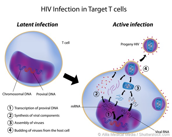 Latent and Active infection of t cell by HIV