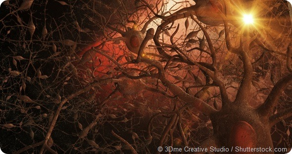 Microscopic view of 3D neurones within the brain