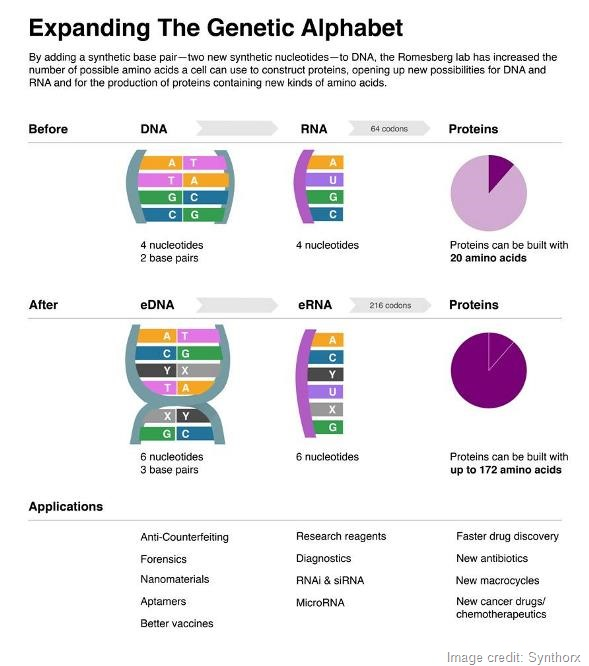 Romesberg infographic - 590