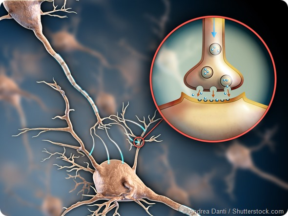 Two neurons connecting by using electrochemical transmissions. Digital illustration