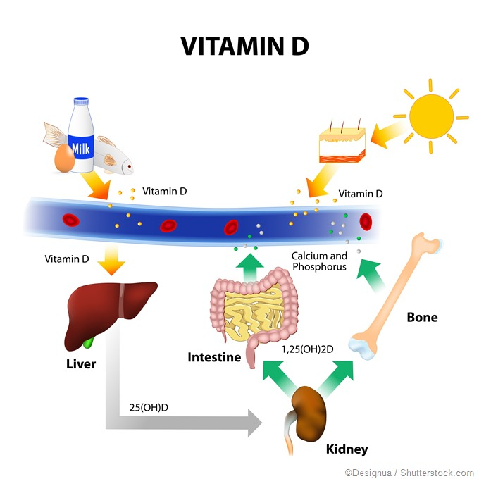 Vitamin D. source and synthesis, UVB radiation illustration