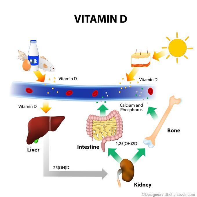 Fonte da vitamina D. e síntese, ilustração da radiação de UVB