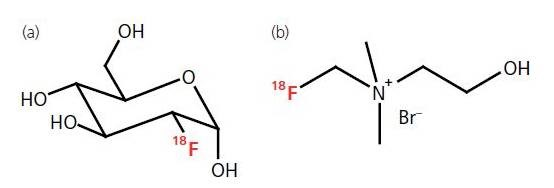 Chemical structures of two PET radiopharmaceuticals. (a) In [18F] FDG, the hydroxyl group at the 2' position of normal glucose is substituted by 18F. (b) In [18F] fluorocholine, a [18F] fluoroalkyl group is attached to the nitrogen atom of N,N-dimethylaminoethanol (DMAE).