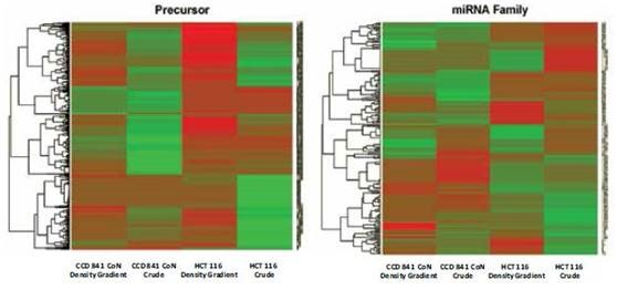 Differential expression heat-map of preparation method within a single cell line. Both precursor miRNAs and mature miRNAs are plotted