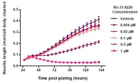Neurite Length in response