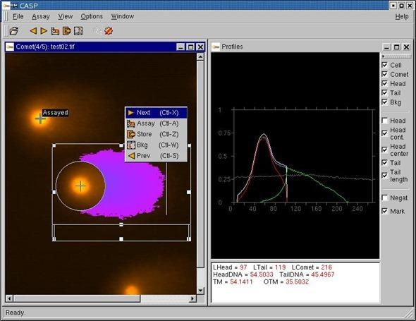 comet assay results